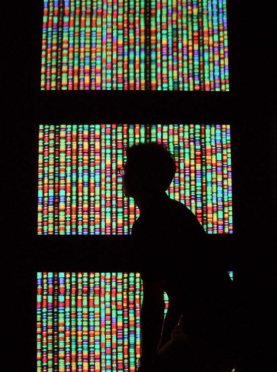 Uma representação gráfica do genoma humano - uma nova técnica, a Crispr/Cas-9, permite fazer alterações precisas no código genético dos seres vivos (Foto: Mario Tama / Equipa/ Getty Images)