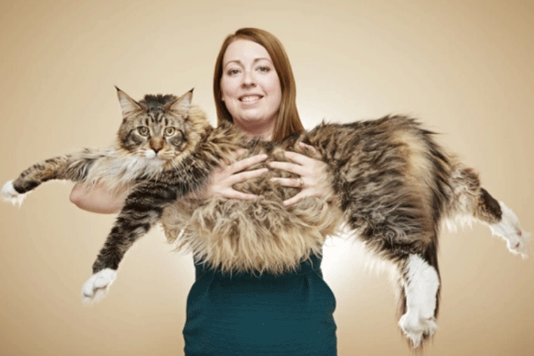 O gato Ludo (Foto: Livro Guinness de Recordes/Reprodução)