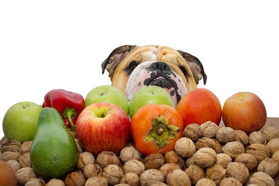 Alimentos que seu cão nunca deve comer (Foto: Thinkstock/Getty Images)