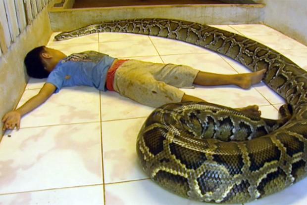 O animal tem aproximadamente 100kg (Foto: TV Globo)