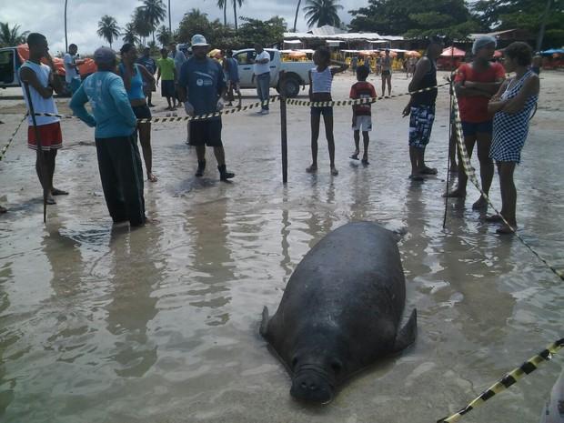 Peixe-boi foi encontrado morto na manhã desta terça-feira (26) (Foto: Divulgação/Biota)