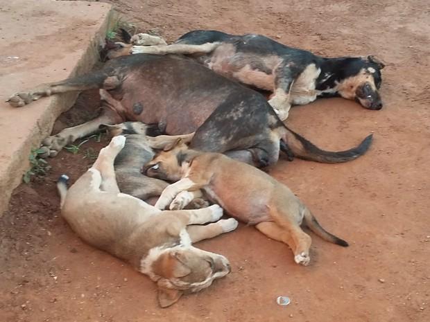Dona de casa registrou a morte dos cinco cães dela (Foto: Suzy Mara/Arquivo Pessoal)