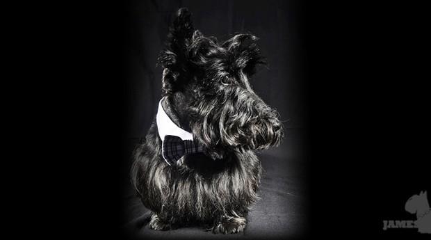 O scotch terrier James Black, que inspirou o nome da loja de Beatriz (Foto: Divulgação)
