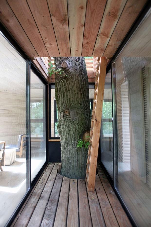 Casa na árvore de hotel imita ninho de pássaro gigante (Foto: Divulgação)