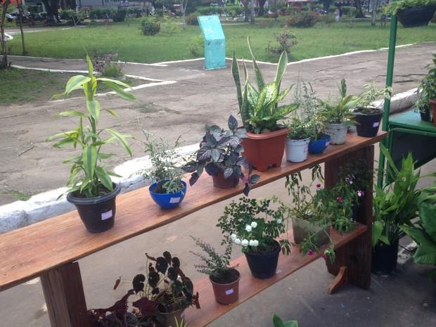 Plantas sendo comercializadas por produtoras do Amapá (Foto: John Pacheco/G1)