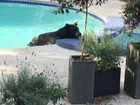 Urso surpreende ao invadir piscina e banheira térmica