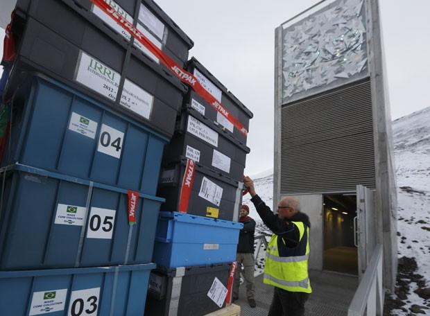 Imagem do momento em que as amostras de semente de arroz e milho chegam ao Banco de Sementes de Svalbard, na Noruega (Foto: Divulgação/Embrapa)
