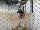 Ligados e com faro aguçado, 14 cães reforçam tropa de Choque em MS