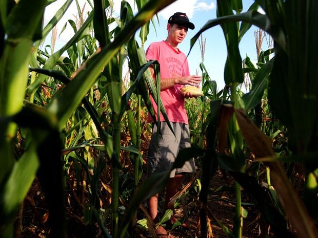Produtor rural caminha por propriedade com plantação de milho em Brasília; homem calcula produzir 90 toneladas a menos neste ano por causa da estiagem (Foto: Pedro Ventura/Agência Brasília)