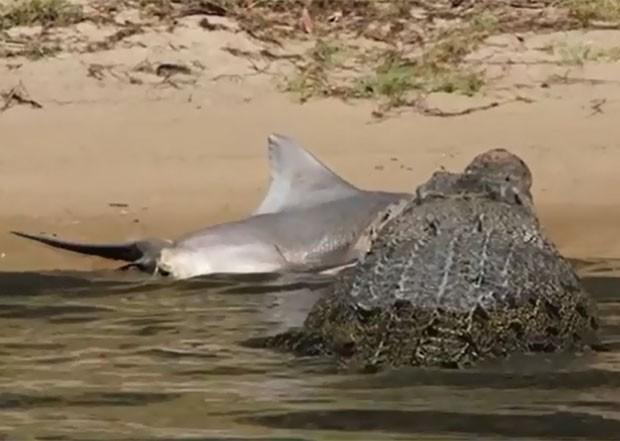 Crocodilo foi flagrado devorando tubarão-cabeça-chata no rio East Alligator (Foto: Reprodução/YouTube/Epic Wildlife)