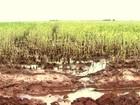 Excesso de chuva faz MS simplificar licença para drenagem em lavouras