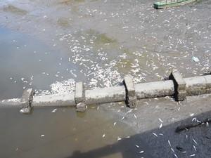 Lixo depositado pela população ribeirinha também contribuiu para a mortandade (Foto: Walter Paparazzo/G1)