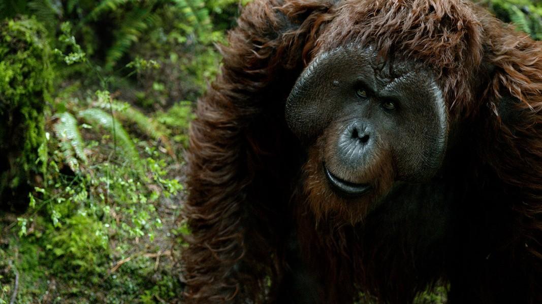 Planeta Dos Macacos o Confronto Wallpaper Fotos