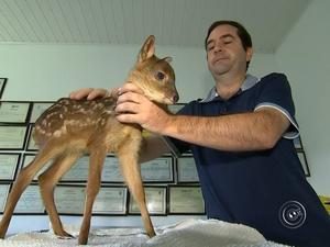 Bambina se tornou mascote de clínica veterinária (Foto: Reprodução/TV TEM)