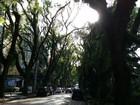 'Rua mais bela do mundo' é liberada e volta a ter luz em Porto Alegre