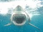 Turista faz foto incrível de tubarão em posição de ataque na Austrália