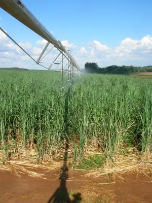 Pesquisa da Esalq afirma que é possível reduzir uso de água pela irrigação em canaviais (Foto: Daniel Nassif/Arquivo pessoal)