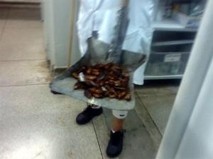 Funcionários recolhem baratas dentro do pronto-socorro infantil de Franca (Foto: Reprodução/ EPTV)