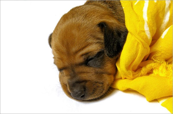Cães precisam de cuidados especiais durante o frio (Foto: Reprodução/Freepik)