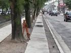 Canal 4 tem nova proibição de estacionamento, em Santos
