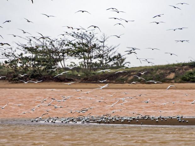 Pássaros continuaram em seu ambiente, mesmo com lama (Foto: Leonardo Merçon / Últimos refúgios)