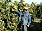 Crise econômica afeta produção da laranja na região noroeste paulista