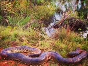 Imagem da cobra que atacou cachorro foi postada na rede social (Foto: Foto: Divulgação)