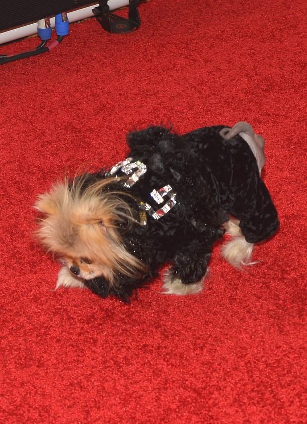 Cachorro Gigi com look estiloso (Foto: Getty Image)