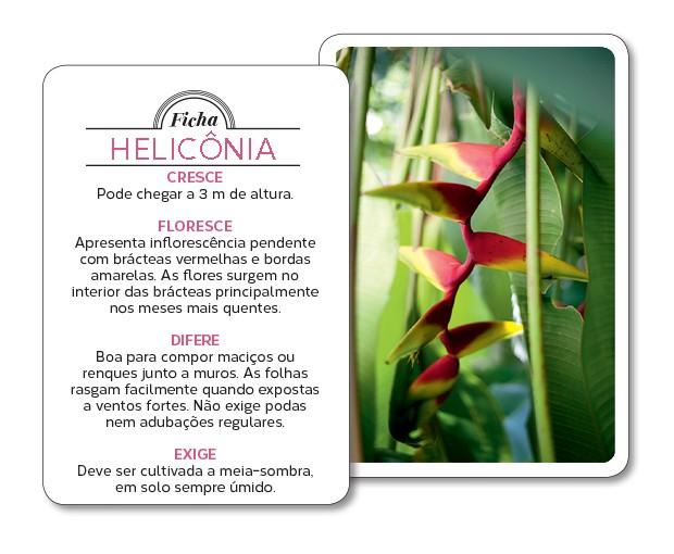 heliconia-ficha (Foto: Pedro Abude/Editora Globo)
