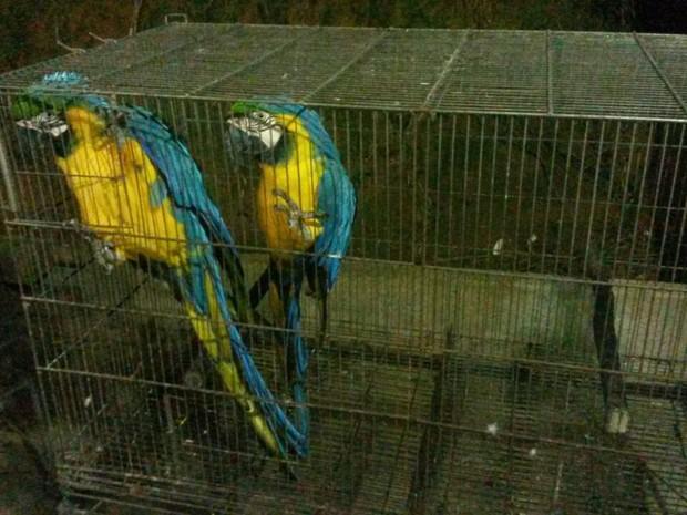 Aves estavam em um sítio, em Cariacica (Foto: Divulgação/Polícia Ambiental)