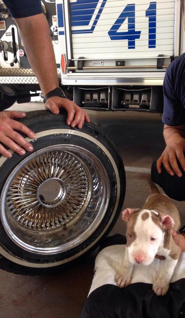Apesar do susto, o cachorrinho chamado 'Junior' não ficou machucado. (Foto: James C. Dowell/AP)