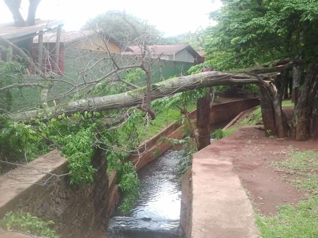 Chuva causa estragos em Campo Grande, MS (Foto: Laura Toledo/G1MS)