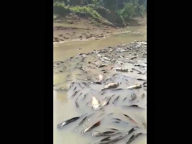 Imac descarta que peixes tenham morrido envenenados  (Foto: Clemilton Damasceno/Arquivo Pessoal)