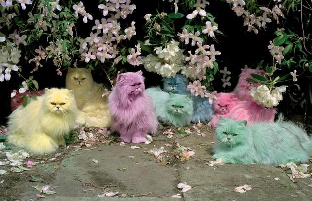 TIM WALKER: Pastel cats, publicada na edição de novembro de 2000 (Foto: Divulgação )