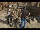 Fósseis de dinossauros achados em Uberaba são apresentados