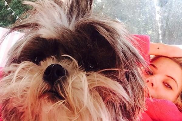 A Olive, cadelinha de Ashley Benson, não é uma graça? Além desta, a estrela de 'Pretty Little Liars' também é dona o cãozinho Walter. (Foto: Reprodução/Instagram)