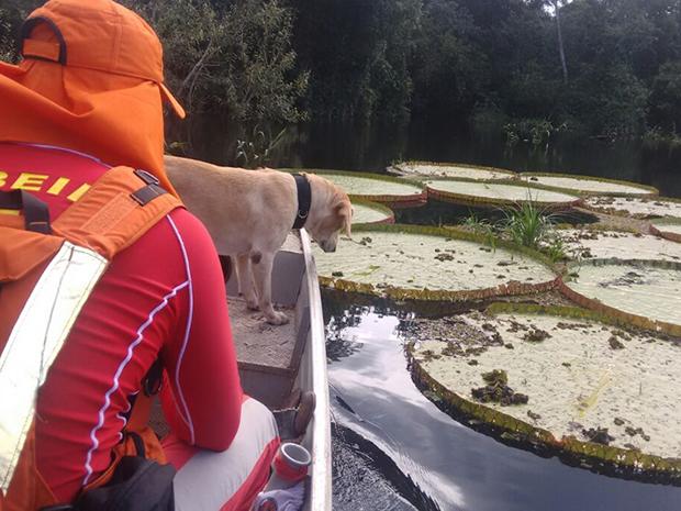 A cadela Sharon, da raça labrador, participou das buscas (Foto: Corpo de Bombeiros/Divulgação)
