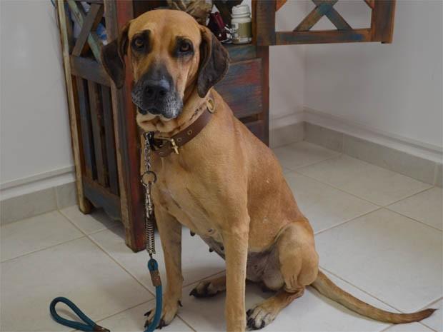 """""""Bela"""" foi resgatada em estrada de terra e se recupera em clínica veterinária de Ribeirão Preto, SP (Foto: Adriano Oliveira/G1)"""