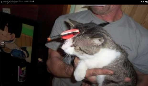 Gato fica com flecha atravessada na cabeça, mas sobrevive, nos EUA (Foto: Reprodução)