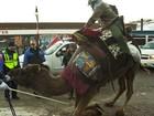 Americano é notificado por andar de camelo e atrapalhar o trânsito