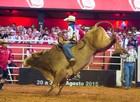 Fotos: Veja as semifinais do rodeio internacional de Barretos (Érico Andrade/G1)