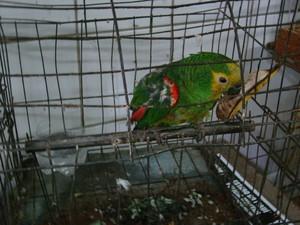 Animais eram comercializados por dono de casa na Zona Sul de Teresina (Fot Gil Oliveira/ G1)