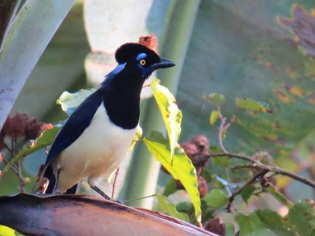 Garça-picaça foi a primeira ave fotografada pela estudante (Foto: Tainá Teixeira Furtado)