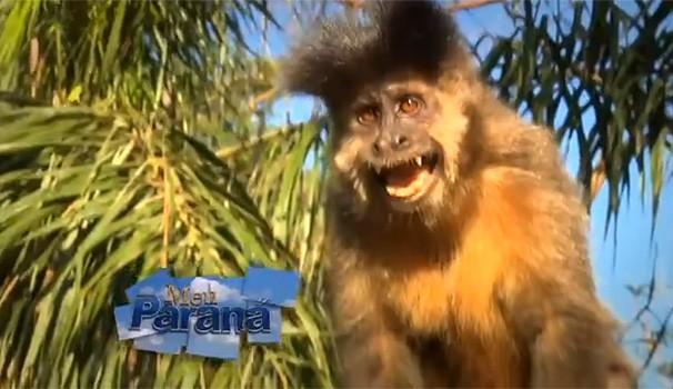 Meu Paraná Macacos Maringá (Foto: Reprodução/ RPC TV)