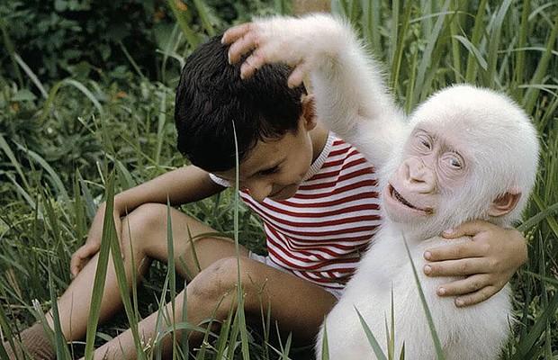 Gorila albino: até hoje, só houve um no mundo. Chamado de Floco de Neve, o animal viveu entre 1963 e 2003 e foi muito famoso, estampando até capas de revistas especializadas em natureza. Teve 22 filhos, mas nenhum deles albino (Foto: Reprodução/Bored Panda)