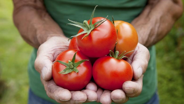 tomate_hortifruti (Foto: Thinkstock)