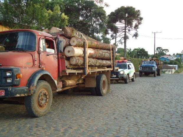 Caminhões carregados com toras de araucária seguiam para madeireira de Inácio Martins, no Paraná (Foto: Divulgação/Polícia Ambiental de Guarapuava)