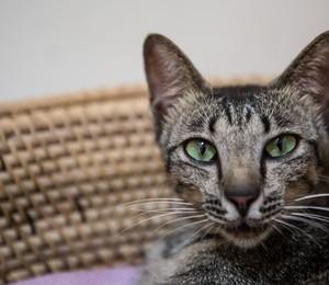 Gato aguarda adoção  (Foto:  Putu Sayoga/Getty Images)