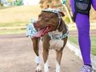 Concurso de ONG vai premiar o cão mais bem fantasiado, em Macapá