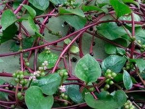 300x225Mistura com Rodaika Inspiração bertalha plantas (Foto: Divulgação/Matos de Comer)